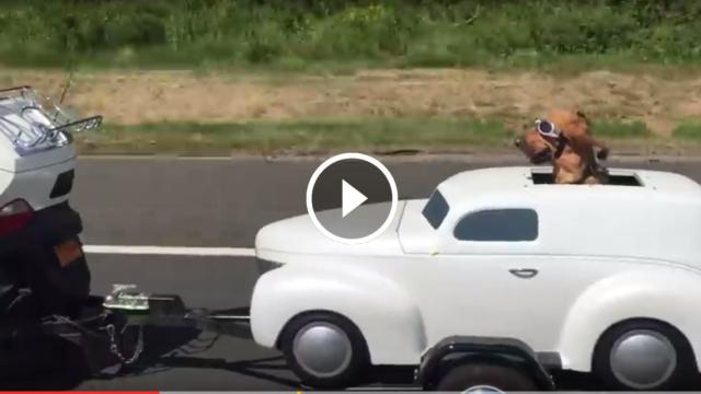 Un vero biker indossa gli occhiali da moto anche se ha la sua auto personale 😂😂😂