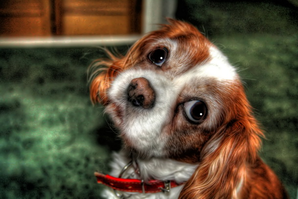 cane-con-occhi-dolci