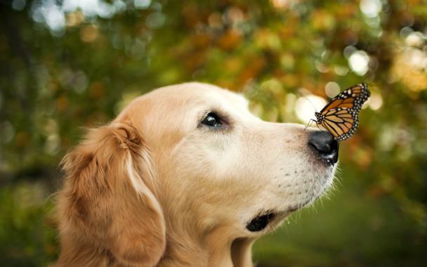 cane-farfalla