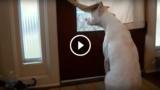 Cani che aspettano il ritorno del loro padrone, ma quando arriva… che felicità!