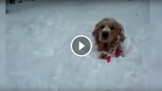 Cani che vedono la neve per la prima volta, quello che fanno è fantastico!