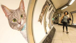 La metropolitana di Londra sponsorizzata dai GATTI