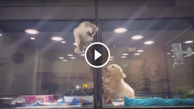 La storia di questo gattino ha fatto il giro del mondo. E ci insegna che per l'amore niente è impossibile ❤