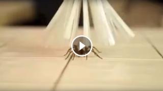 Acchiappa ragni o altri insetti senza fargli del male