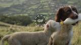 Le sorprendenti immagini di Jess che allatta un agnellino con il biberon.