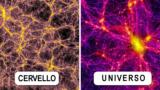 La sconvolgente relazione tra l'universo e il corpo umano.