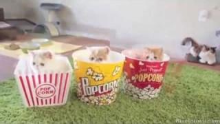 Chi vuole un popcorn?