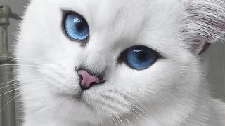 Si chiama Coby ed è il gatto con gli occhi più belli del mondo