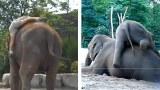 Come salire in groppa a un elefante