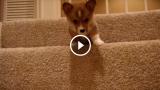 La prima volta sulle scale