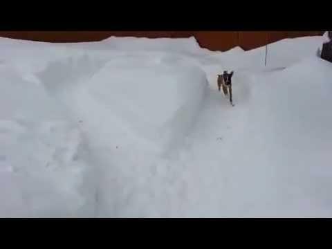 Il cane ingenuo raggirato furbescamente dal più anziano :-)