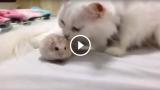 Criceti e gatti vanno d'accordo?