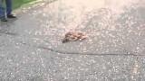 Cerbiatto appena nato giace inerme sulla strada… guardate cosa succede