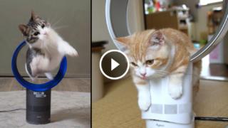 L'unico ventilatore silenzioso, potente, senza pale, che purifica l'aria… a prova di bimbo e di gatto!