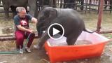 """L'elefantino si """"tuffa"""" nella vasca e il bagnetto diventa uno show"""