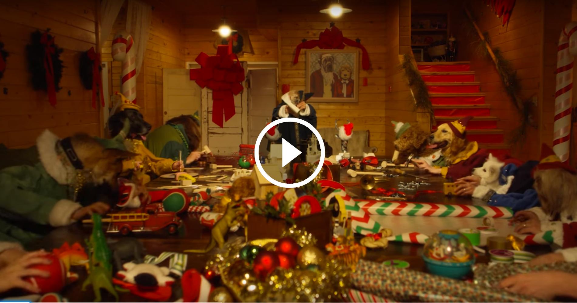 Foto Degli Elfi Di Babbo Natale.Degli Elfi Molto Speciali Stanno Aiutando Babbo Natale