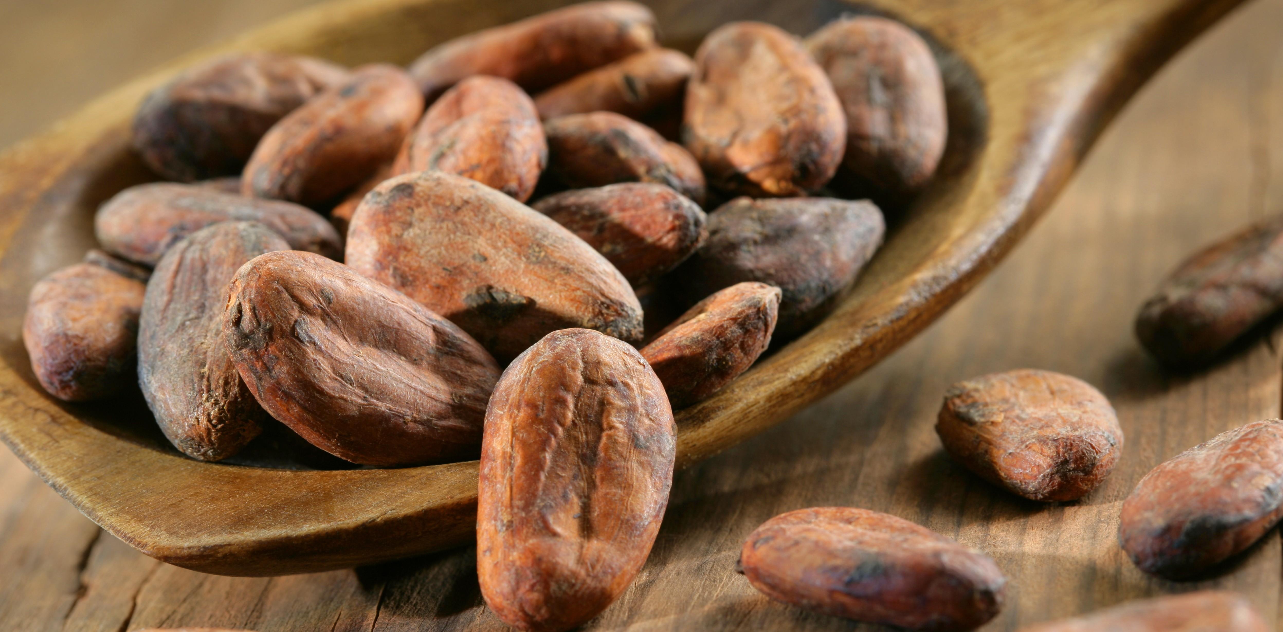 Infuso Alla Menta E Fave Di Cacao
