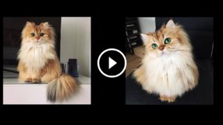 Ecco Smoothie, il gatto più fotogenico al mondo