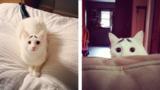 12 gatti con le macchie più strane. Quando il micio sembra dipinto
