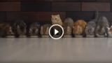 Compilation di gatti super divertenti