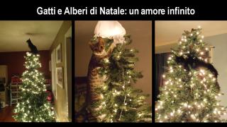 Gatti e Alberi di Natale: amore impossibile