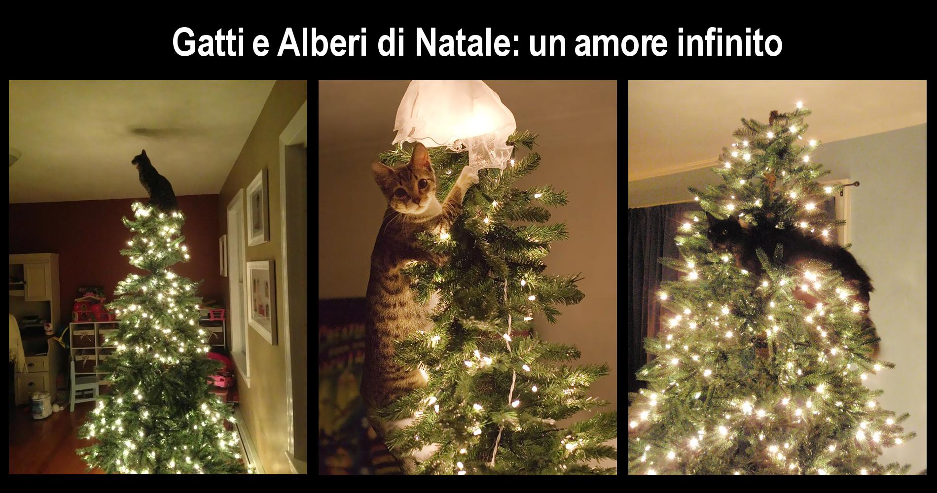 Frasi Di Natale Youtube.Gatti E Alberi Di Natale Amore Impossibile