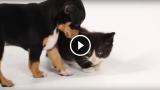 Gattini incontrano Cagnolini per la prima volta!