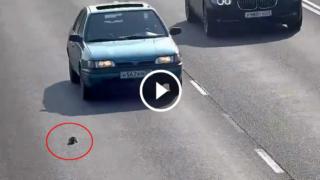 Russia, gattino lanciato sull'autostrada: il miracoloso salvataggio di un automobilista eroe
