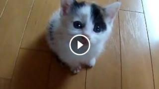Il micetto scalatore che vuole le coccole
