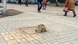 Il padrone lo ha abbandonato, il gatto lo aspetta da un anno sempre nello stesso posto…