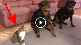 Traditore della razza felina! Guardate cosa fa