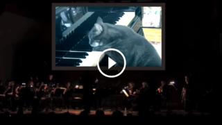 Concerto per gatto e pianoforte, una performance unica e originale