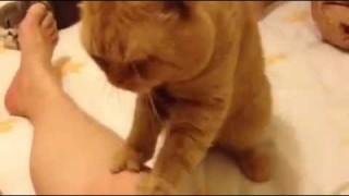 """Gatto Fisioterapista. Prezzi modici. Citofonare """"Miao"""""""