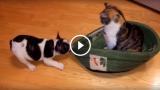 L'impassibilità del gatto, nei confronti del cucciolo che vuole la sua cuccia, è encomiabile!