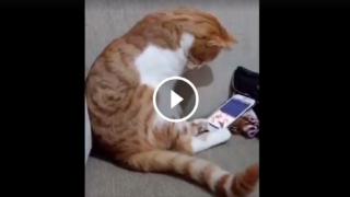Un gatto che si comporta come un nativo digitale umano