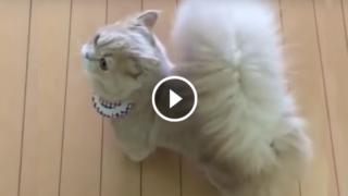 Il gattino con la coda da scoiattolo