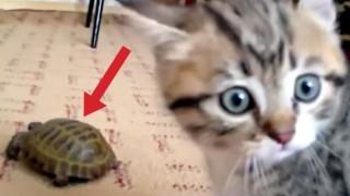 """""""Chi è questo instruso?"""" La reazione del gatto fa morire dal ridere!"""