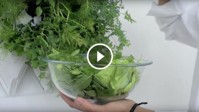Il giardino verticale controllabile con uno smartphone, che si innaffia solo ogni 30 giorni