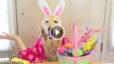 Ginger augura Buona Pasqua a tutti !!