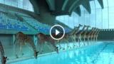 Se pensi che una giraffa non possa tuffarsi in una piscina, non hai abbastanza immaginazione…
