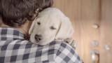 """""""Ci vediamo più tardi"""" dice il ragazzo al cucciolo. Ogni ora che passa i suoi occhi si fanno sempre più tristi e preoccupati."""