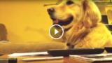 Sorride, ma quando la musica smette, il cane si ferma e torna serio.
