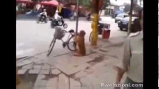 Il cane antifurto fa la guardia alla bici del padrone
