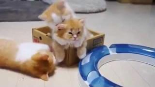 Il potere terapeutico dei gatti viaggia anche attraverso un video