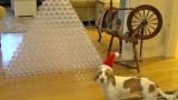 Il regalo più bello per il tuo cane