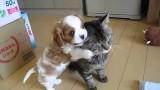 Impossibile scalfire la proverbiale pazienza dei gatti