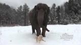 In amicizia non contano le dimensioni, neanche sulla neve!
