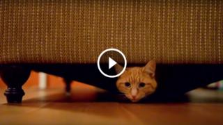 Forse non tutti sanno che stare DENTRO al divano è molto più comodo che starci SOPRA…