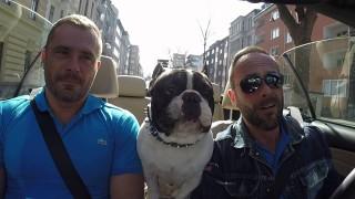 Junior, il bulldog francese che parla tutte le lingue e guarda le ragazze!