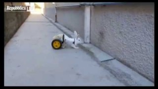 La coniglietta disabile Hope torna a correre!!